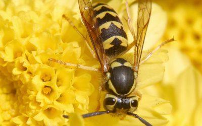 Insektenstiche – Was hilft wirklich? Empfehlungen von Hautärzten