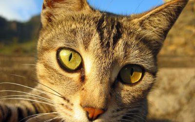 Katzenpilz – Symptome und Behandlung